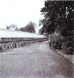 Glasshouses north of Walled Garden (now demolished)