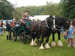 Shire Horses at Bowring Park Heritage Event
